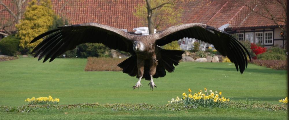 größter vogel der welt spannweite