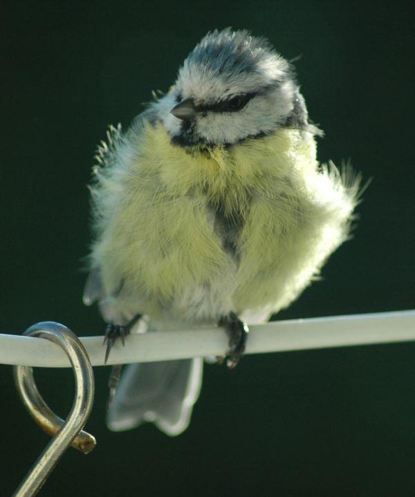 Die Vogeluhr Singende Vogel Zeigen Die Uhrzeit Libellius