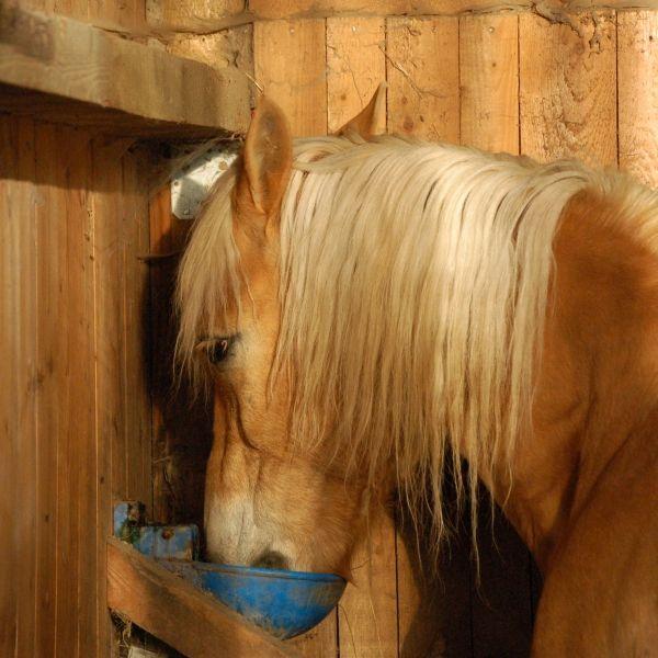 Pferdehaltung: Frostsichere Tränken für den Innenbereich - Libellius