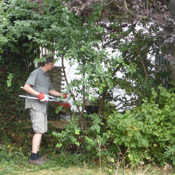 Beliebt Hecken, Sträucher und Bäume schneiden - die besten Hecken- und KW52