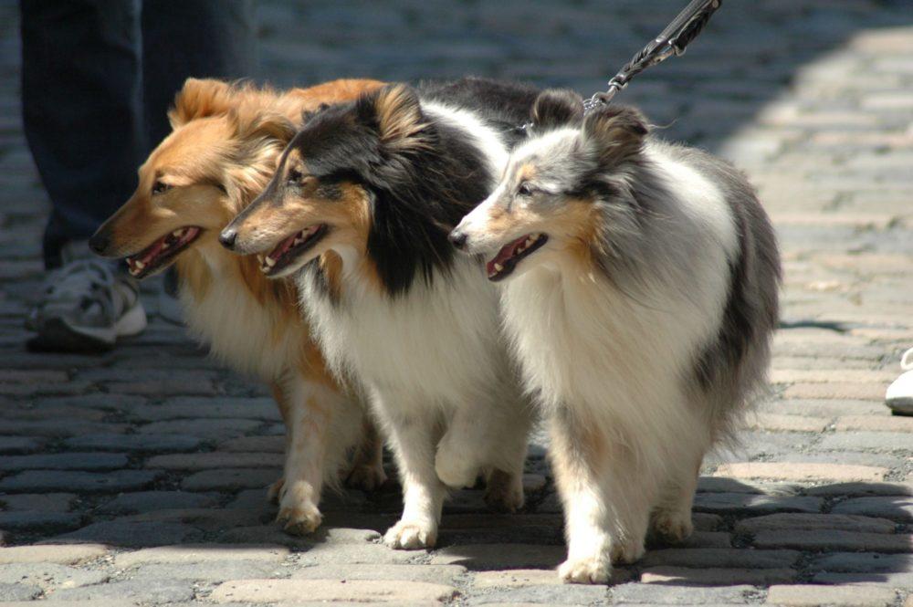 Produktnörgler Hundeportal