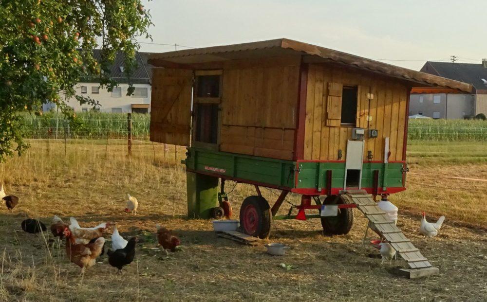 einen hühnerstall umbauen könnt – athletbook